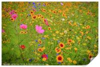 Wild Flowers Meadow, Print
