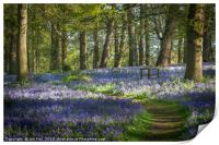A Walk in the Bluebell Wood, Print