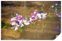 Apple Blossom in Abstract, Print