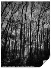Winter Woodland, Print