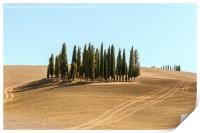 Typical landscapes for Siena Province in Tuscany, , Print