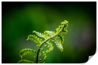Young Fern, Print