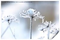 Hoarfrost in Winter , Print