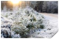 Frosted Forest and Winter Sun, Print