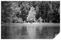 Frosted Trees by Frozen Lake, Print