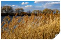 A dry grass on river., Print