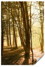 Forest morning , Print