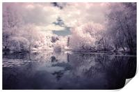 Lilac Reflections in Watermead Park, Print