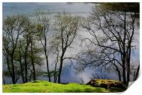 Trees by the Tarn, Print
