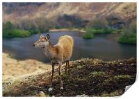 Red Deer Glen Etive, Print