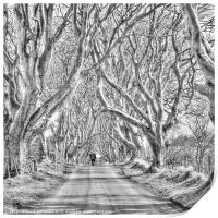 Nearly Home in the Dark Hedges, Print