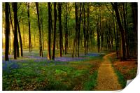 Bluebell woodland path and sunset, Print