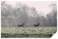 Early morning light on two horses in a frost cover, Print