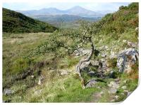 The Old Man of Coniston , Print