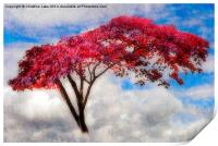 Red Tree in Summer, Print