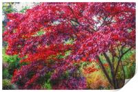 Colours of Nature, Print