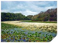 Lily Ponds,Low Water.Pembrokeshire., Print