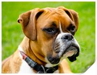 Sidney The Boxer, Print
