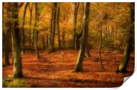 Autumn Woods colour, Print
