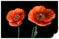 painted poppies, Print