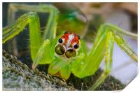 extreme macro of a spiders face, Print