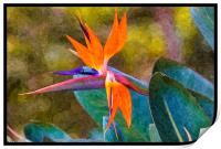 bird of paradise with paint effects, Print