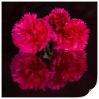 Reflected Carnations, Print