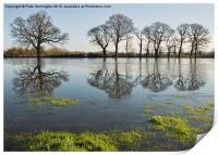 Reflections in flood water, Print