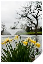 Daffodils and Fountain, Eltham, South London, Print