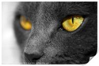 The Golden Eyes of a Cat, Print