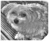 Black and White Pooch, Print