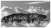 Tree tops in the clouds, Print