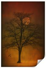 ONE LONELY TREE, Print