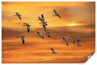 SNOW GEESE OF AUTUMN, Print