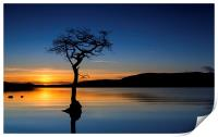 Lone Tree in  Loch Lomond, Print