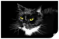 Domestic Black and White cat canvas print, Print