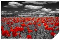 Crimson Poppies, Print
