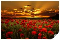 Sunset Poppies The BBMF, Print