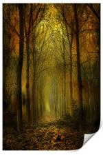 Cathedral of Trees, Print