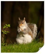 Squirrel  eating nuts in Saltwell Park, Print