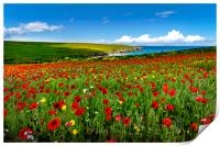 Poppy fields on the north Cornwall coast , Print