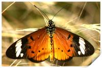 The Butterfly resting, Print