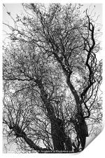 Winter Trees Canvases and Prints, Print