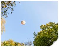 Hot Air Balloon, Print