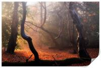 Autumn in Epping Forest, Print