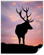 Stag And Sunset , Print