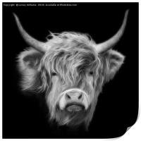 Highland Cow in Black and White, Print