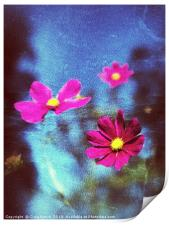 Pink Flower abstract, Print