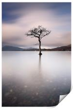 Loch Lomond Tree, Print