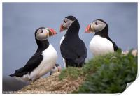 A Contemplation of Puffins, Print